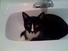 Quark in the sink