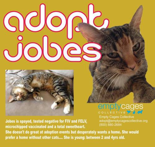Beautiful Jobes Needs a Home!